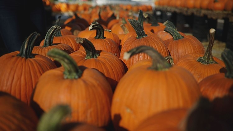 Ready for fall? Here's what Floridians are searching to prepare