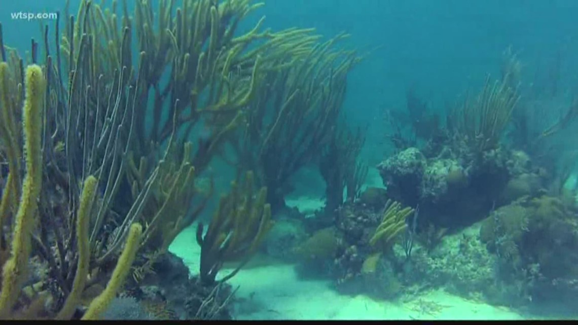 Disease, rising ocean temps and increased levels of carbon dioxide threaten Florida's coral reefs