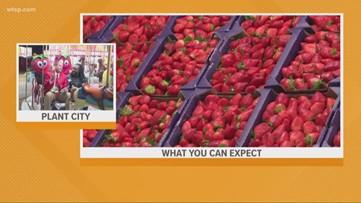 Florida Strawberry Festival begins today