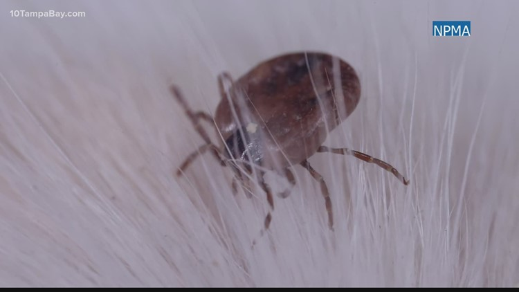 Tick season is here: What you need to know if you find one and how to keep them out of your home
