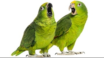 Parrot screams, 'Let me out!' Florida deputies respond to 911 call -- and everyone laughs