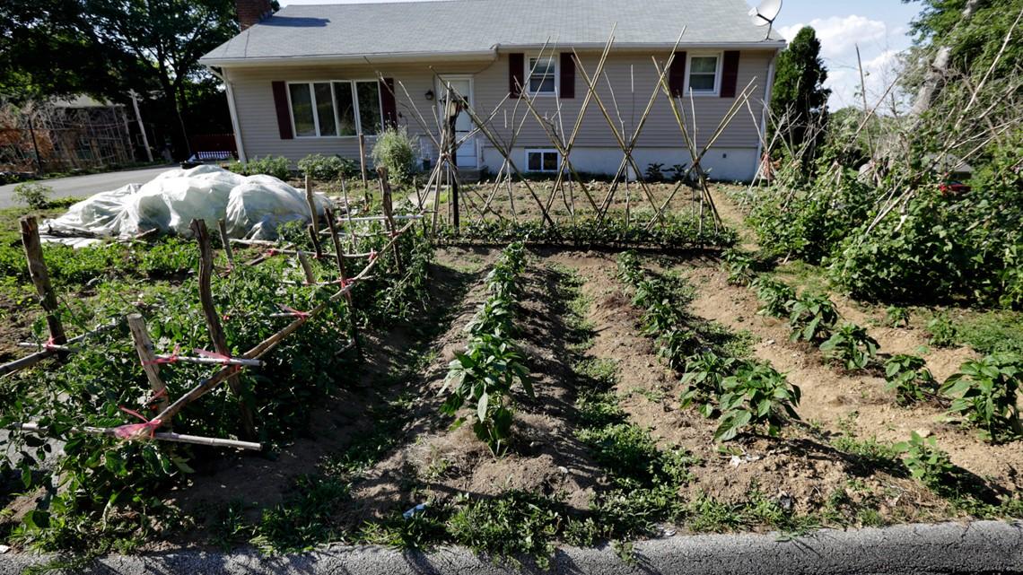 Florida passes front yard vegetable garden bill | wtsp.com