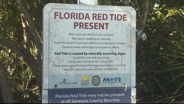 As red tide creeps north, beach communities fear news coverage will scare people away