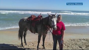 A horse was killed. Florida investigators say it's becoming a terrible trend.