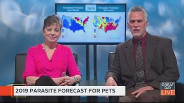 2019 parasite forecast revealed for pets