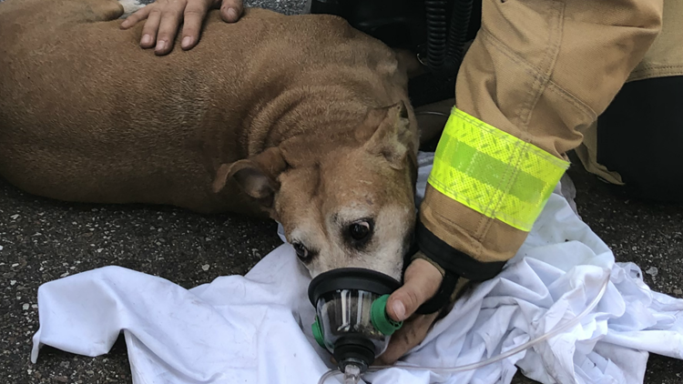 One dog saved from house fire. Four others didn't make it