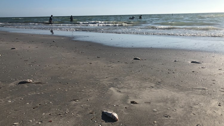 Red tide levels in the greater Tampa Bay area begin to show improvement