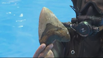 Shark-Con in Tampa: Dive into exploring our oceans | 10News WTSP