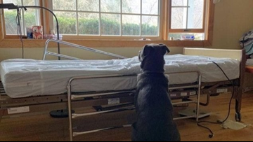 Photo of dog at late owner's bedside is breaking hearts on social media