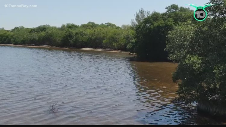 Researchers forecast the polluted Piney Point water will flow in Tampa Bay