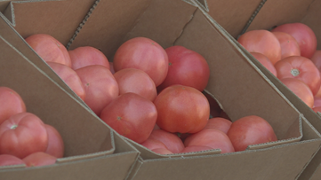 Manatee County growers sell tomatoes for cheap during COVID-19 pandemic