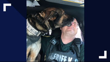 Florida deputy wants to buy K-9 while on extended leave. Sheriff's office says dog is not for sale
