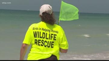 Dozens of sick birds rescued on Gulf beach