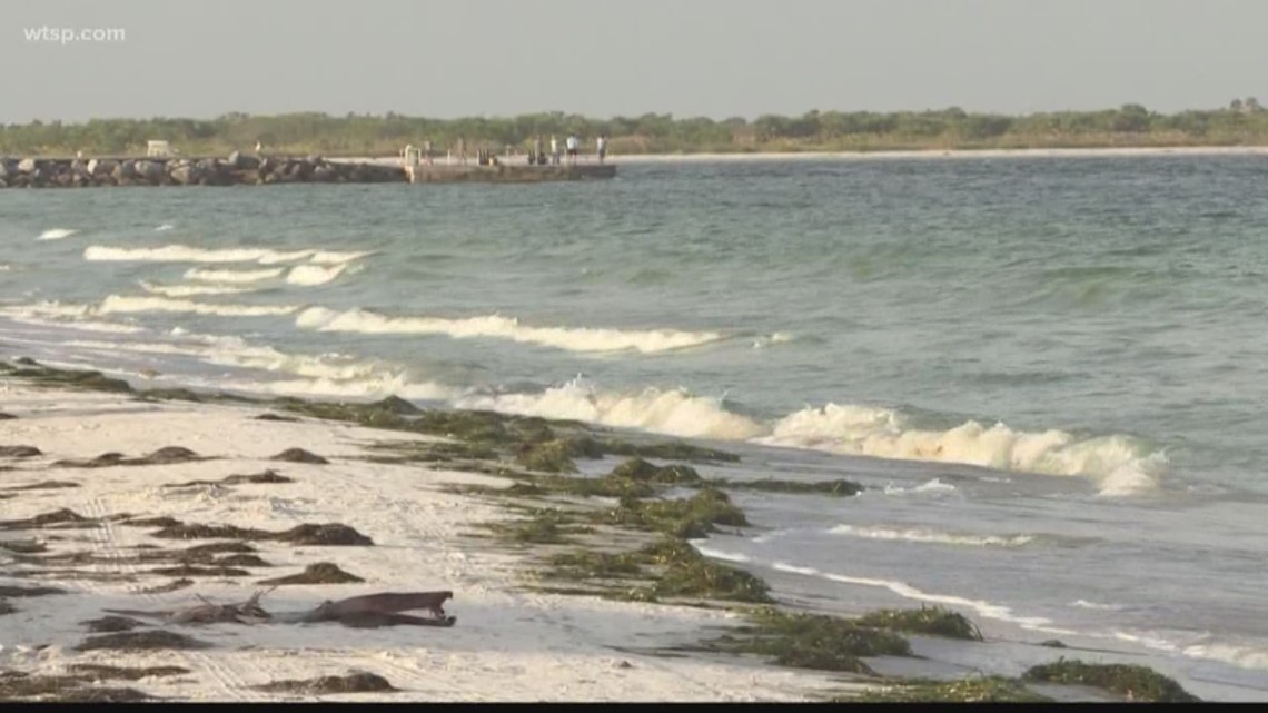 Low Concentrations Of Red Tide Measured In South Pinellas County