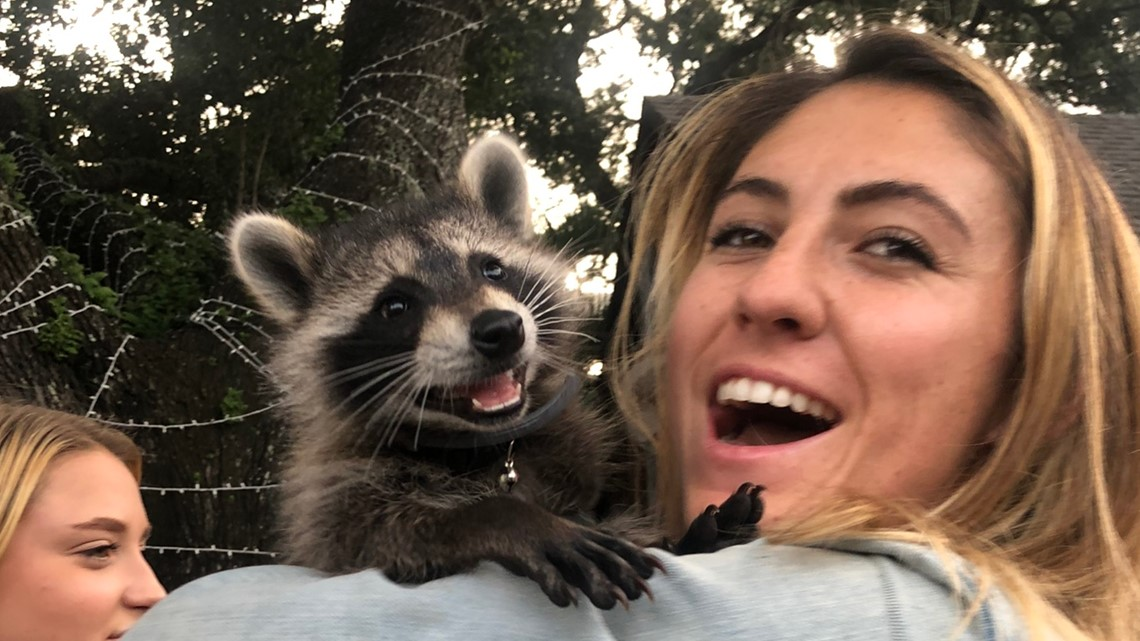 Family fights FWC to keep pet raccoon