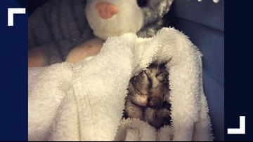 Somebody abandoned a kitten in a parking lot, and it was hit by a vehicle