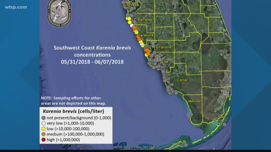 Gas Prices In Florida >> Red tide detected in Sarasota, Manatee Counties | wtsp.com