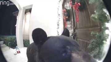 'Bear, go away!' Naples homeowner spies furry visitor at front door