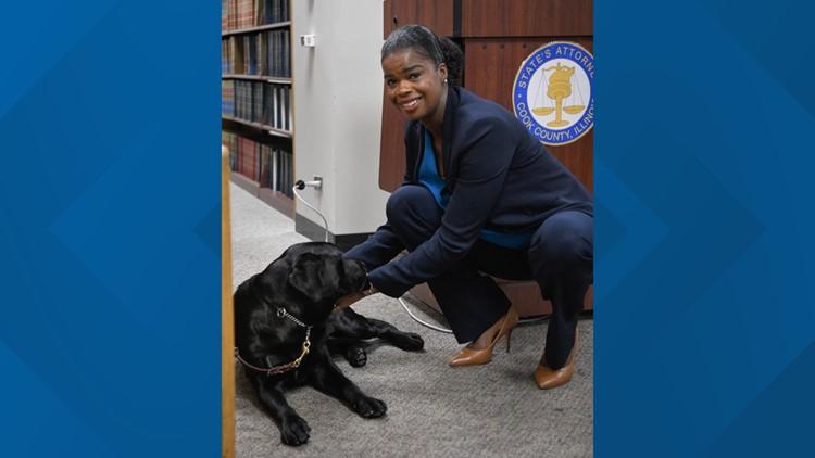 Hatty chicago state attorney comfort dog