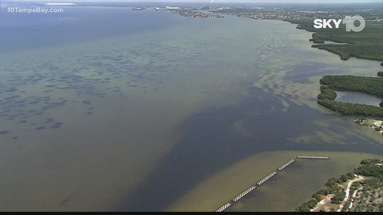 This is where researchers forecast the polluted Piney Point water will flow in Tampa Bay