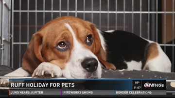 How to keep pets calm when fireworks BANG | wtsp com
