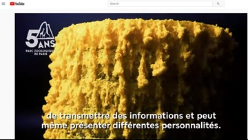 Paris zoo debuts 'The Blob' organism with no brain, 720 sexes