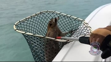 They were called to save a turtle. They found a raccoon.