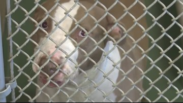 Hillsborough County animal shelter waves adoption fees through the weekend