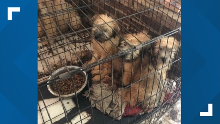 80 dogs saved from suspected puppy mill in Virginia