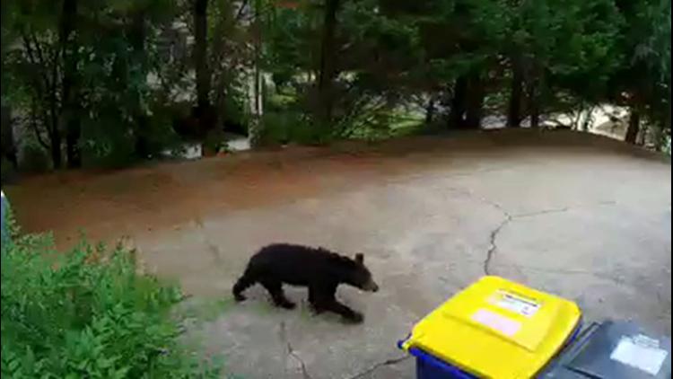 Bear spotted on camera in Georgia neighborhood