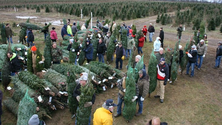 Farm donates 465 Christmas trees to military families