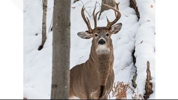 Rare 3-antler buck spotted in Michigan